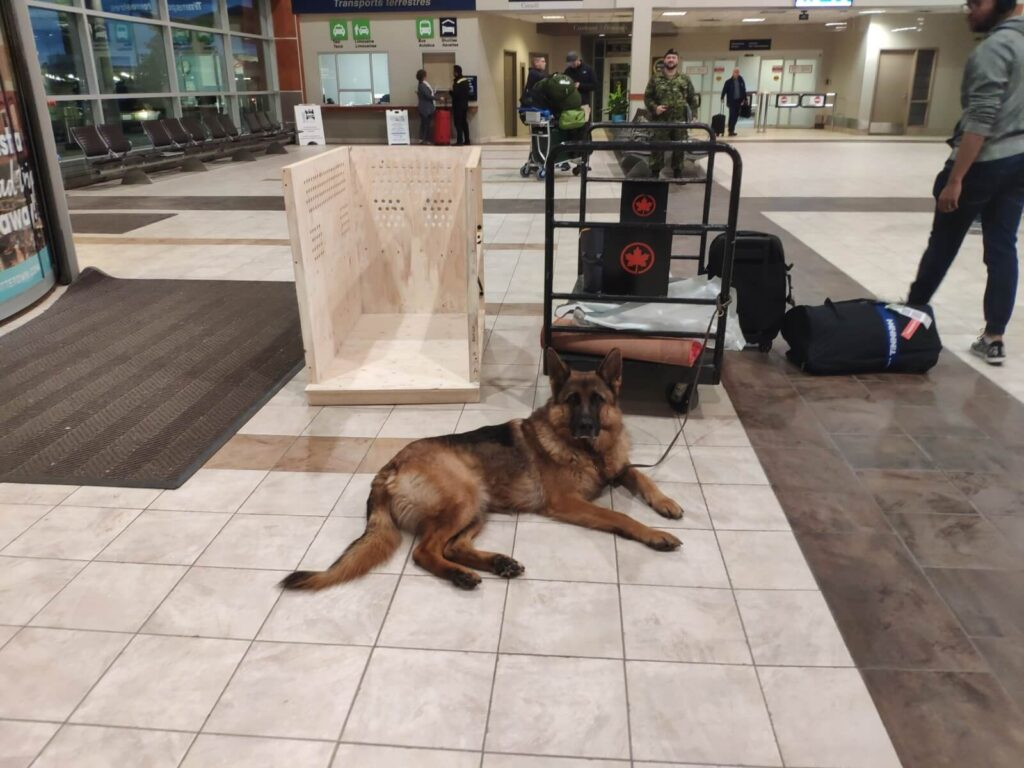 Die Reise beginnt! Frankfurt-Halifax! Ich komme! Mit Hund und Hundebox nach IATA Vorschrift!