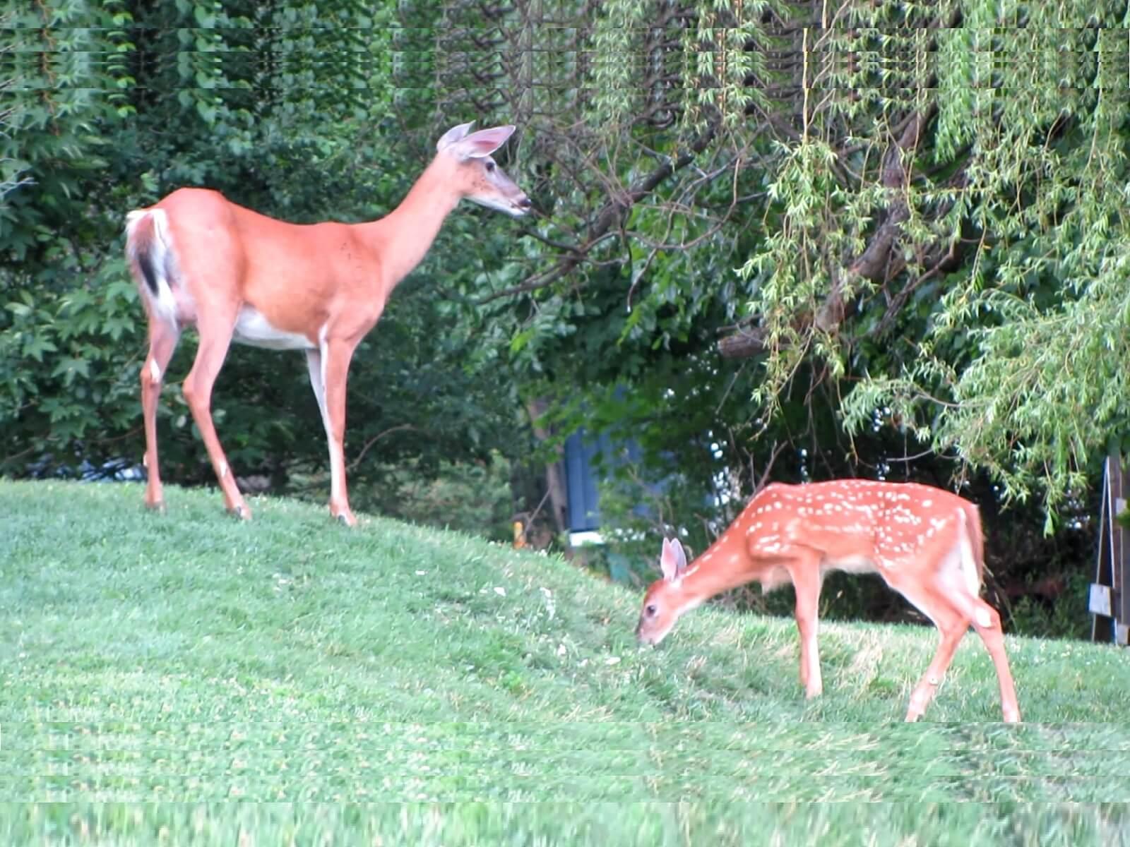 31.07. bis 07.08.2019: Wilde Tiere und der Weg über Québec, Montréal und Kingston Richtung Niagarafalls!