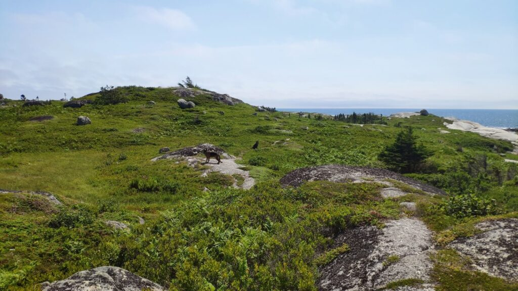 Findet die Hunde in Peggy's Cove