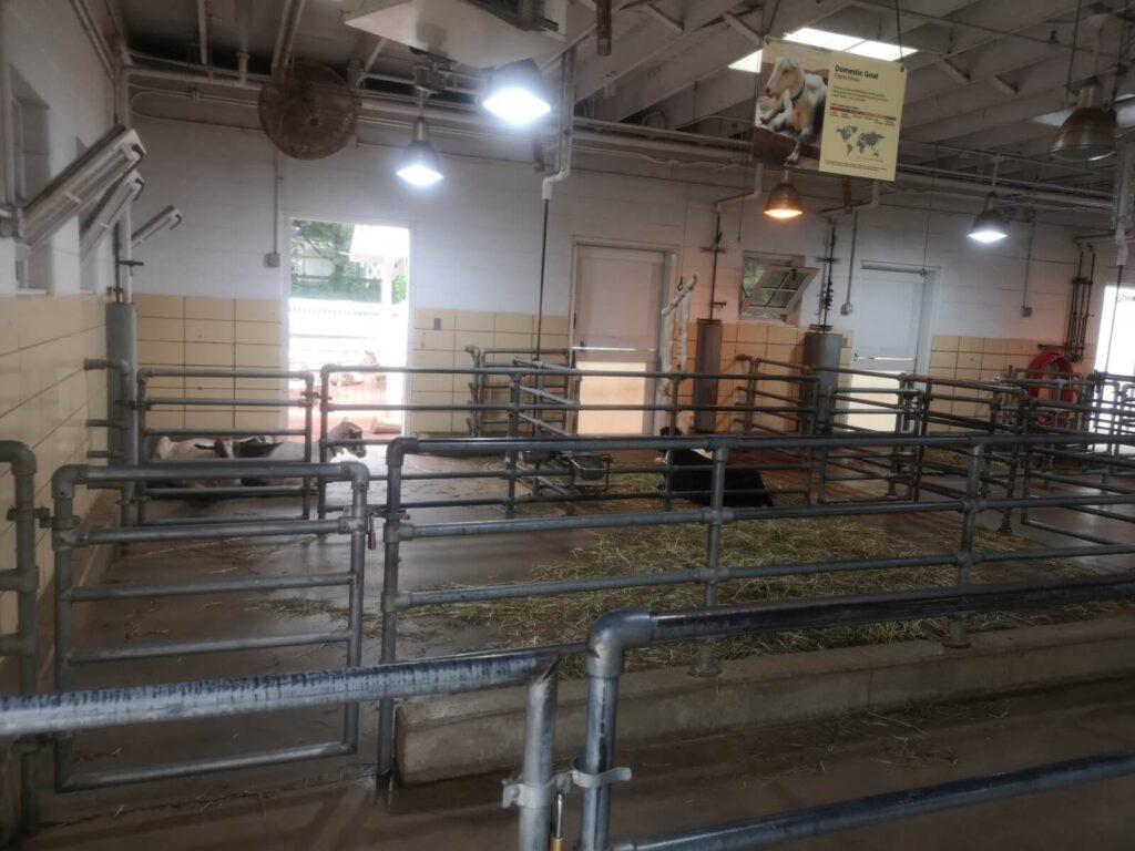 Kühe im Zoo / Die Kühe sind Ziegen...