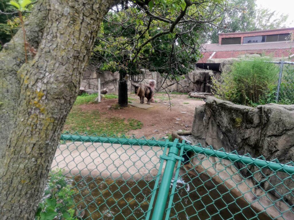 noch mehr Tiere im Park