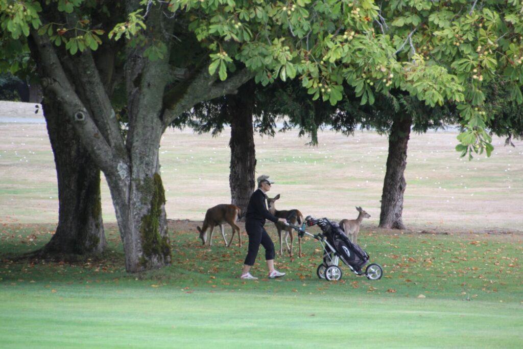Eine Golferin vor Rehen