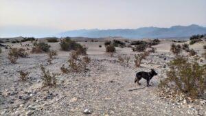 Finn in der Wüste