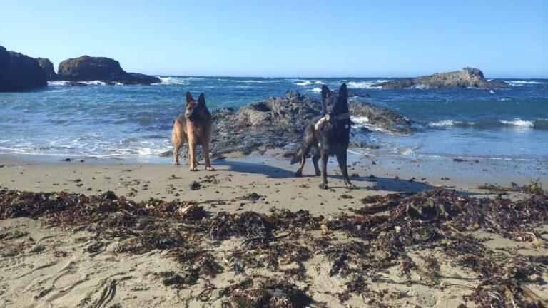Kaschmir und Finn am Meer