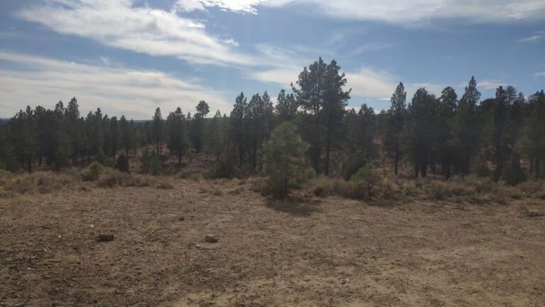 Ein Wald bei Bryce