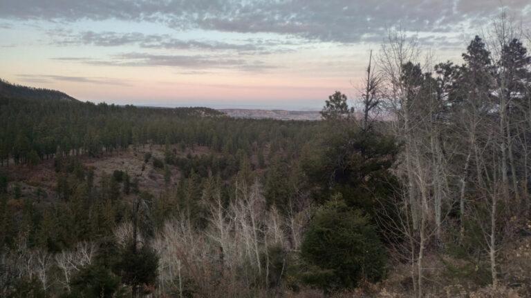 Blick auf den Rosebud Wald