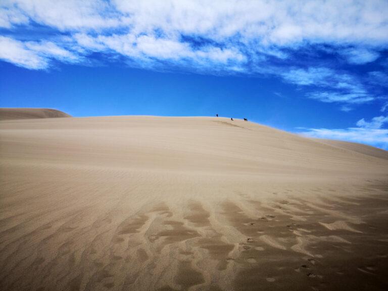 Great Sand Dunes Maik und die Hunde weit weg in einer Düne