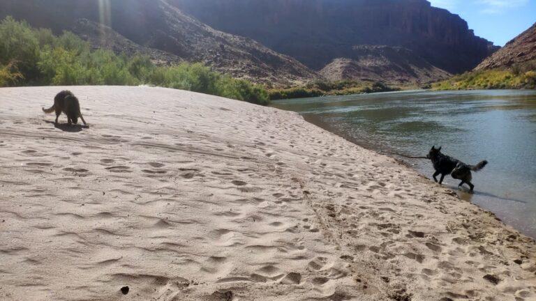Hunde am Strand des Colorado Rivers