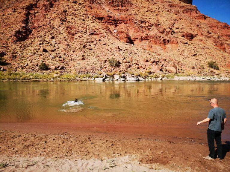 Finn schwimmt im Colorado