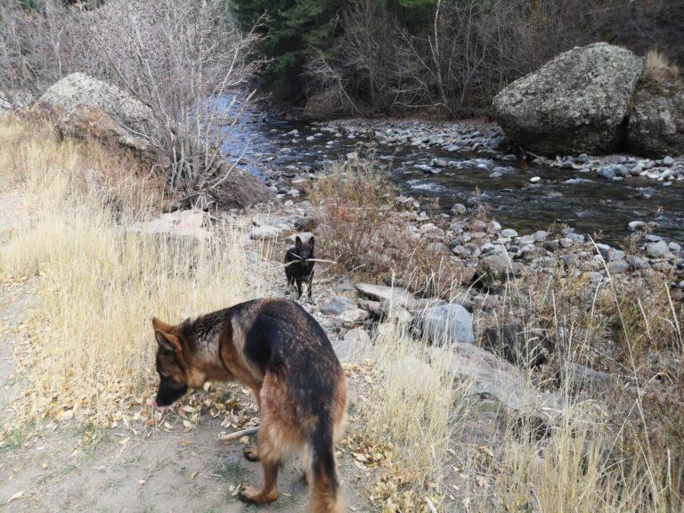 Hunde am Fluß