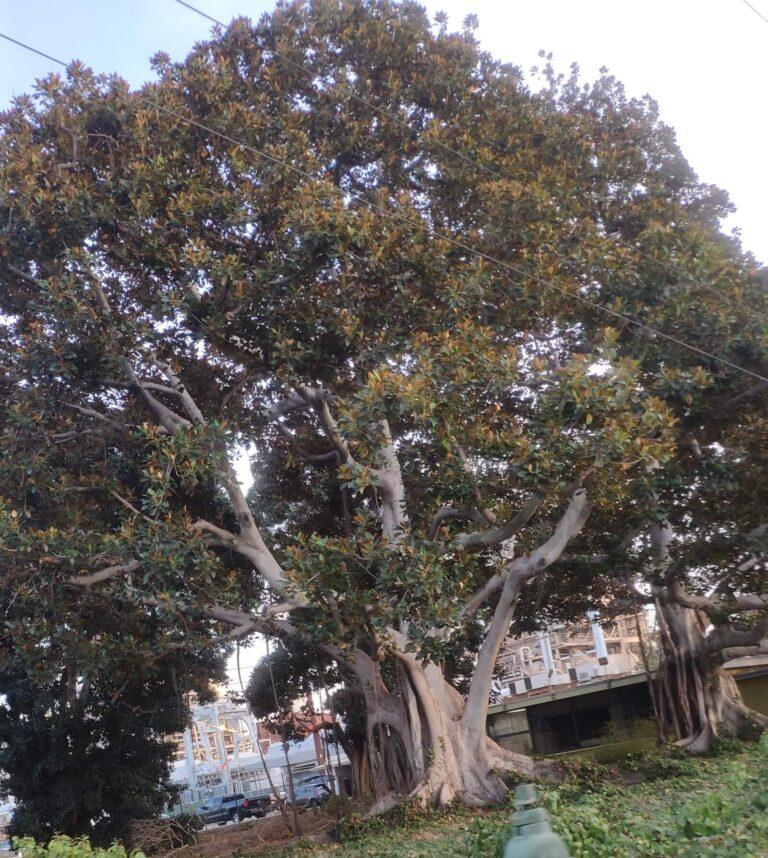 Baum in Kalifornien