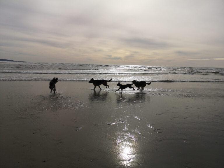 Del Mar Hunde spielen