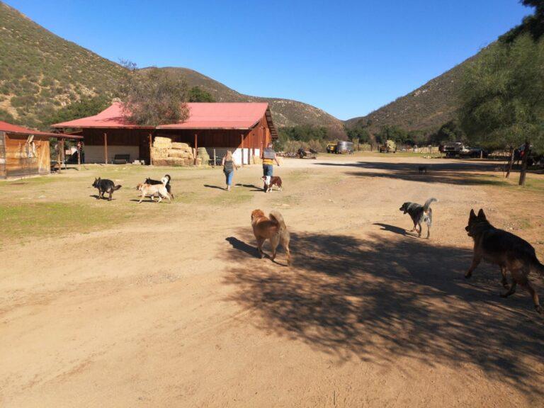 Farm-Rundgang