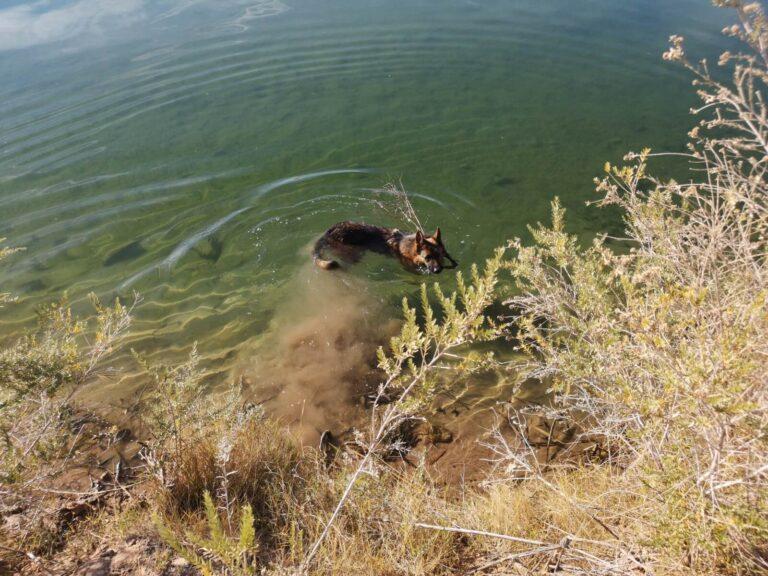 Holtville BLM Hundeschwimmen