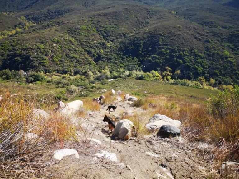 Aussichtsplattform Hunde