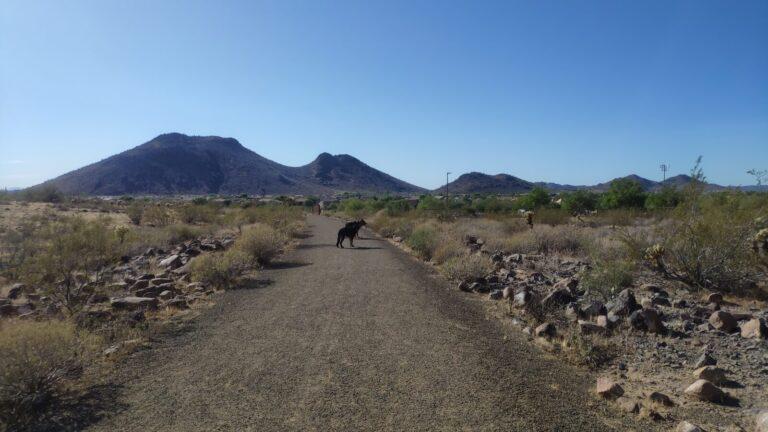 Hundetag nahe Phoenix