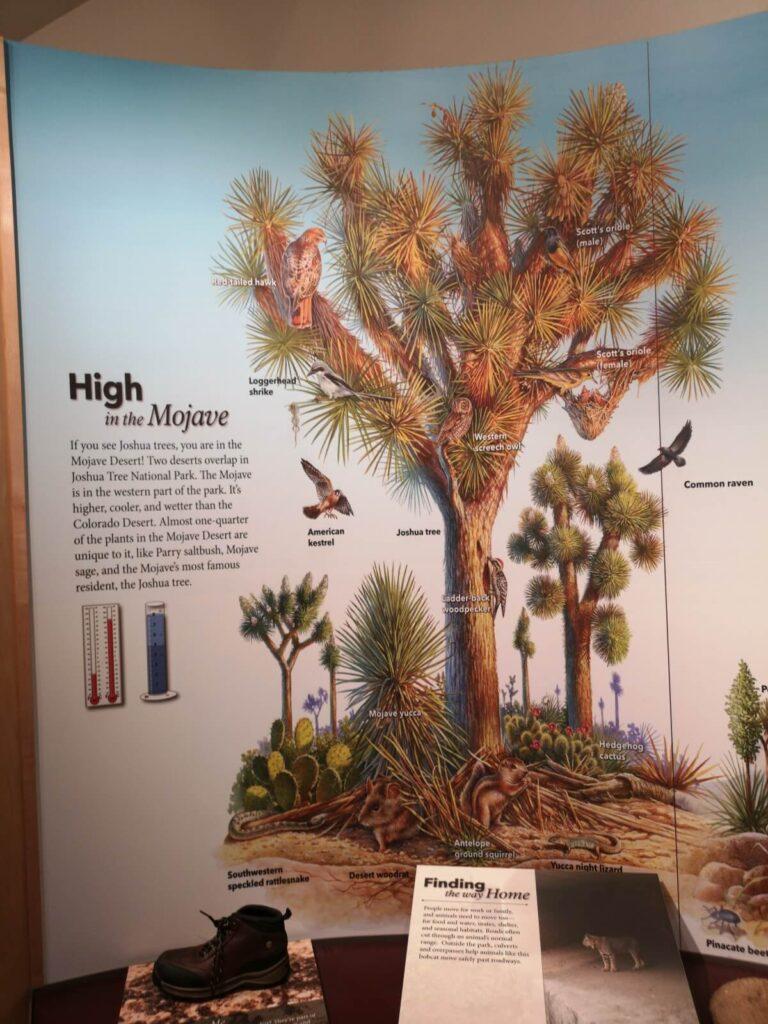 Joshua Tree Plakat