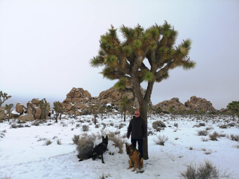 Maik Joshua Tree