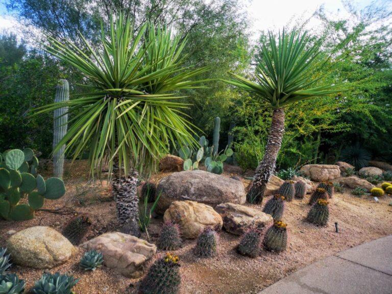 Botanischer Garten Phoenix