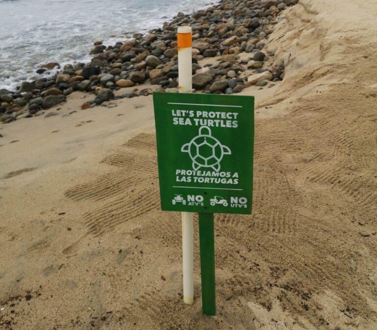 Schützt die Schildkröten