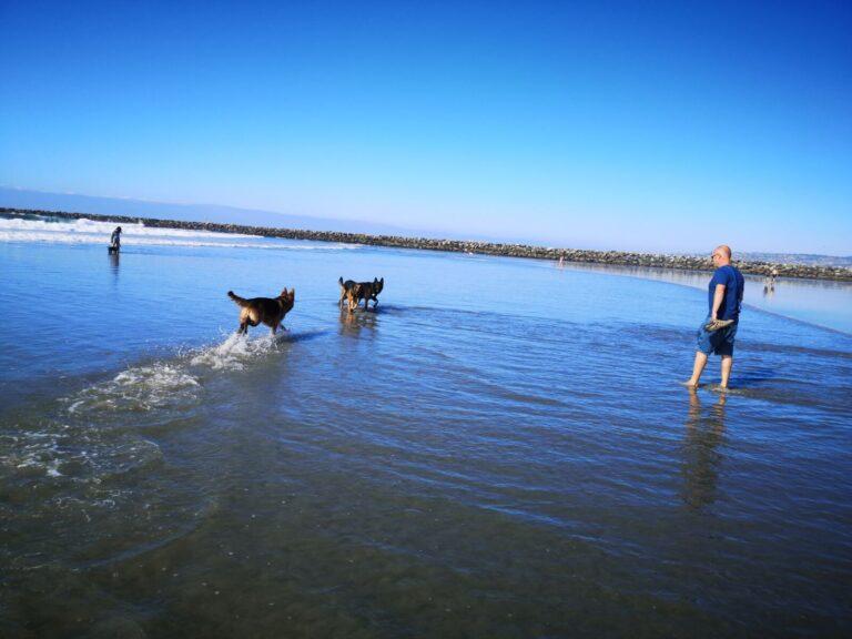 San Diego Dog Beach Hundeschwimmen