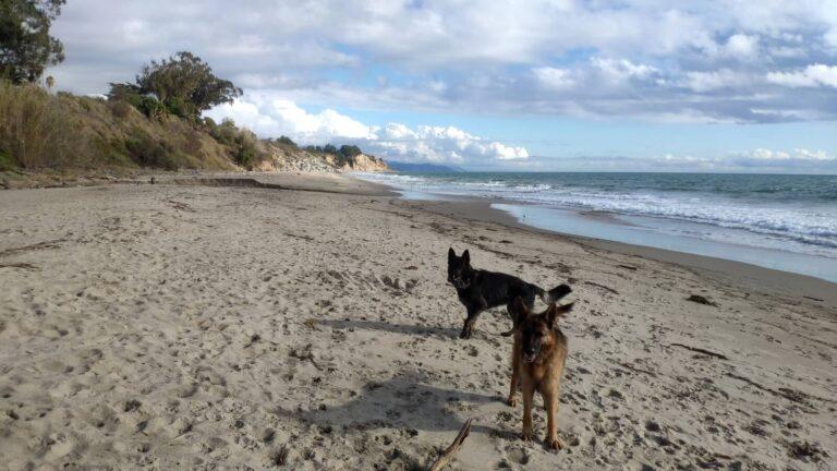 Hunde am Strand von Summerland