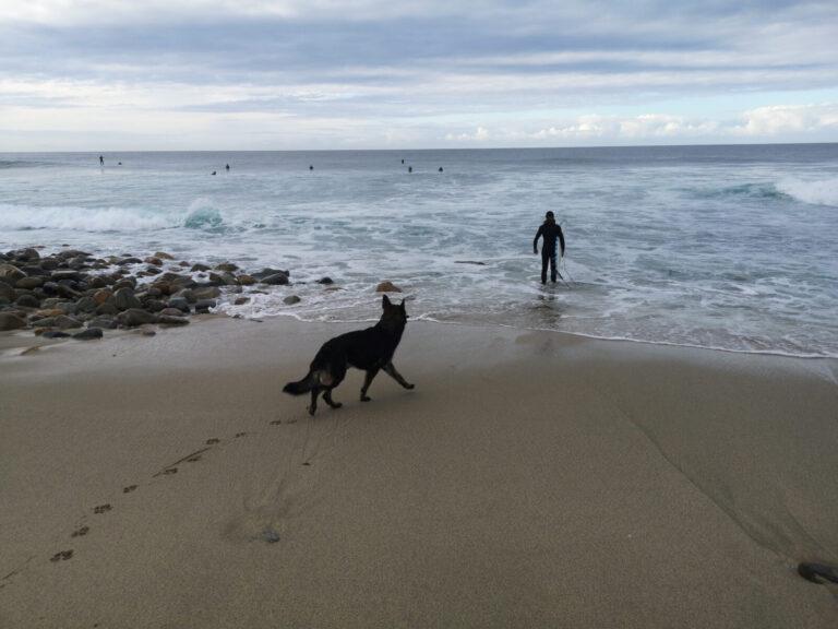 Finn beobachtet Surfer