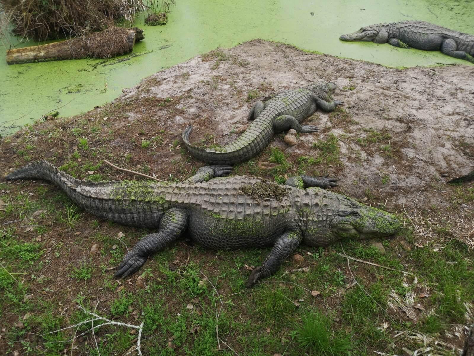 15.03.2020 bis 23.03.2020: Kriegsschiffe und Alligatoren – Weiterreisen trotz weltweiter Gesundheitskrise?