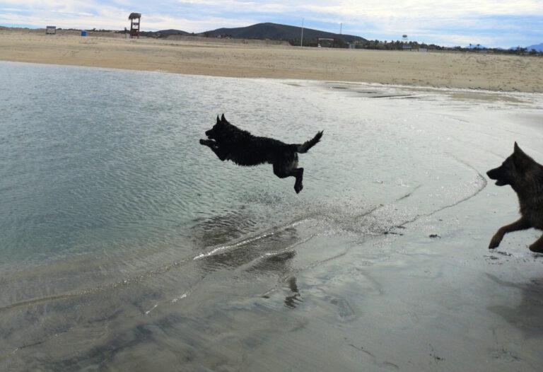 Finn springt