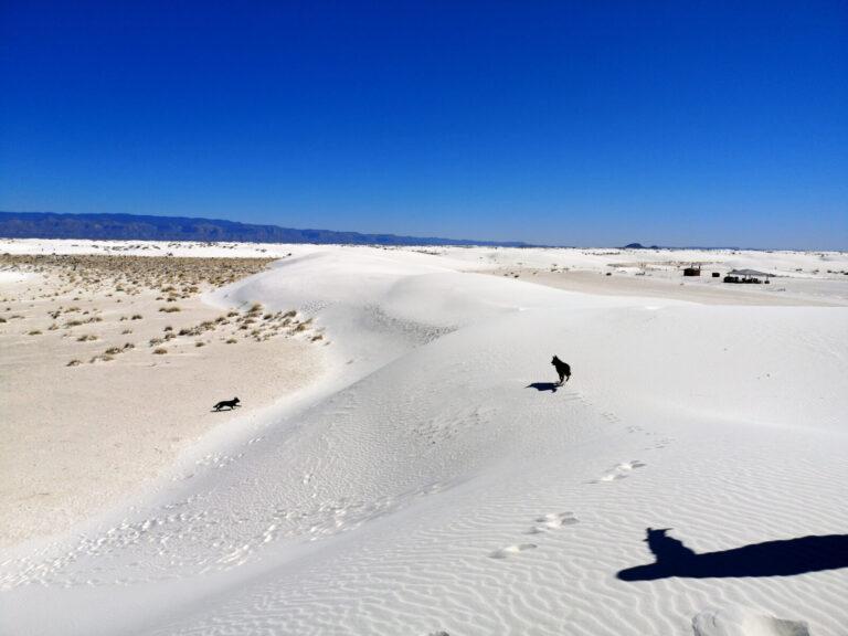 Hunde im Sand