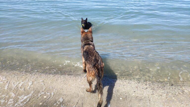 Hundeschwimmen Laguna