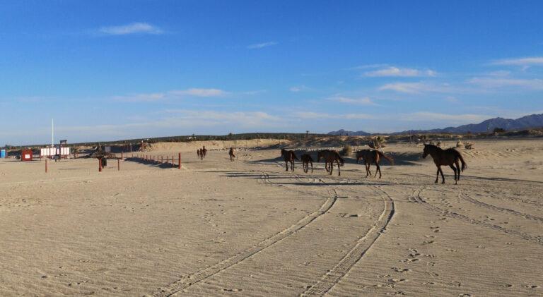 Pferde Herde