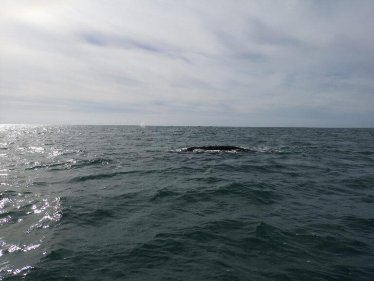 Wal gesehen
