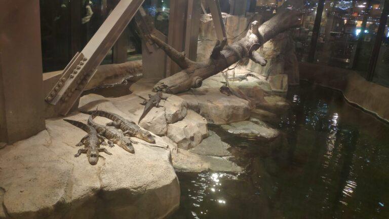 Bass Pro Alligatoren