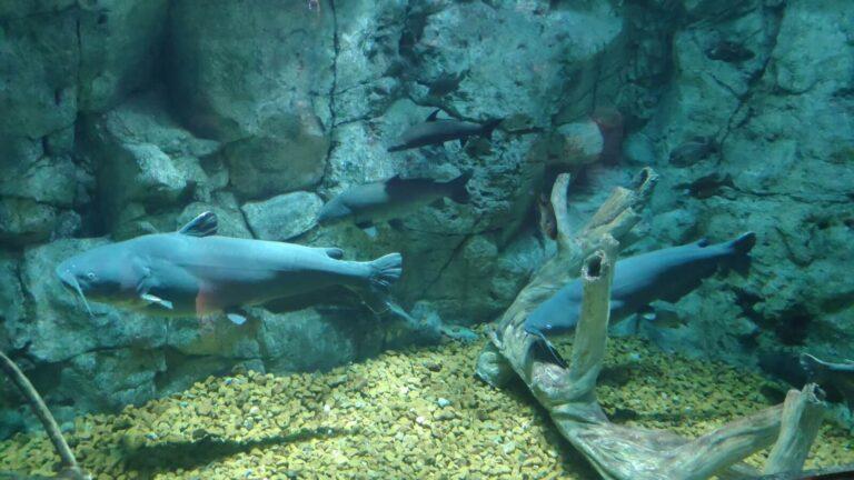 Bass Pro Aquarium