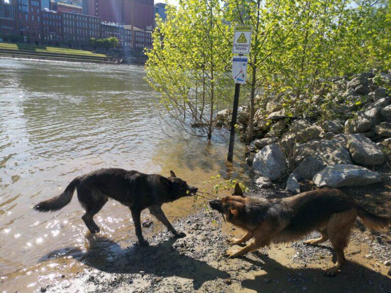 Nashville Hundebad