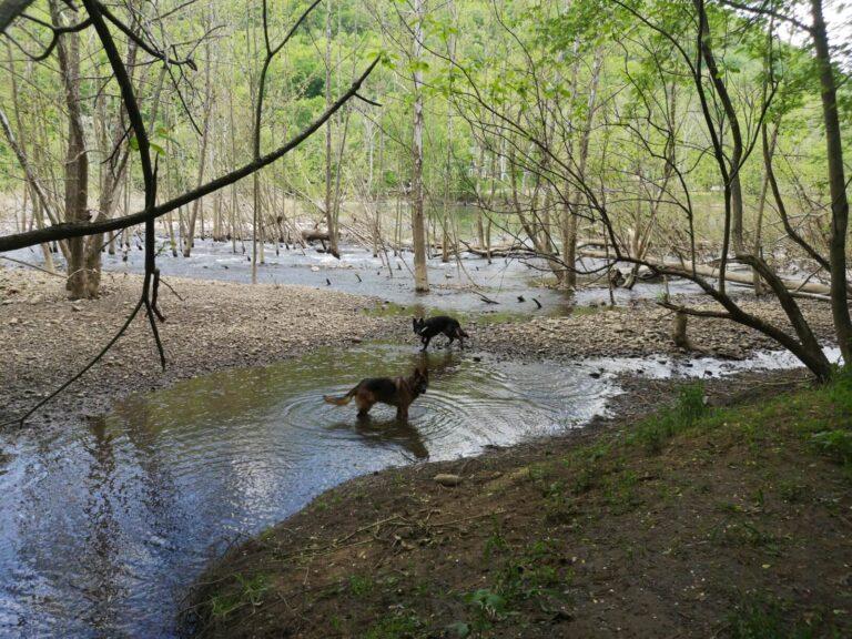 Finn und Kaschmir New River