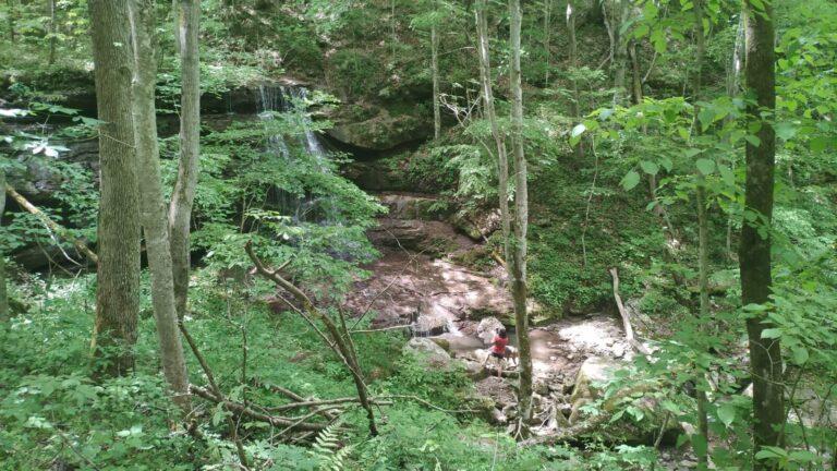 Iris unterhalb Wasserfall Big Branch