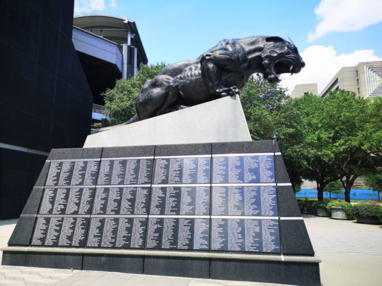 Panther in Charlotte