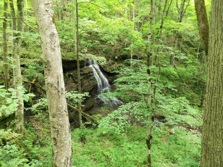 Urwald Wasserfall Big Branch