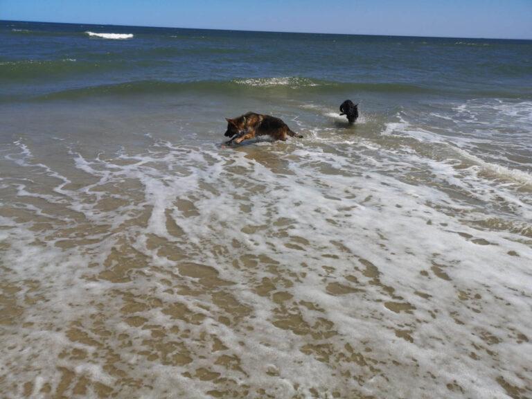 Virginia Beach Hundebad