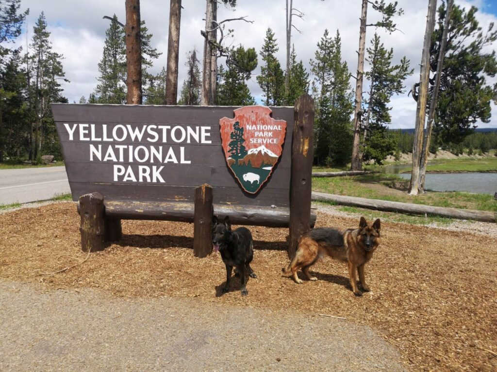 Hunde Yellowstone Eingang