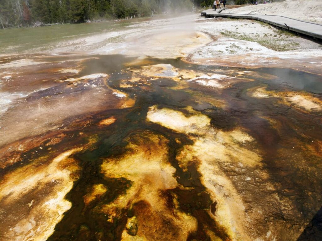 Yellowstone schwefelige Bakterienlandschaft