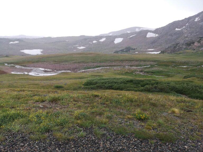 Beartooth Pass Schneefelder