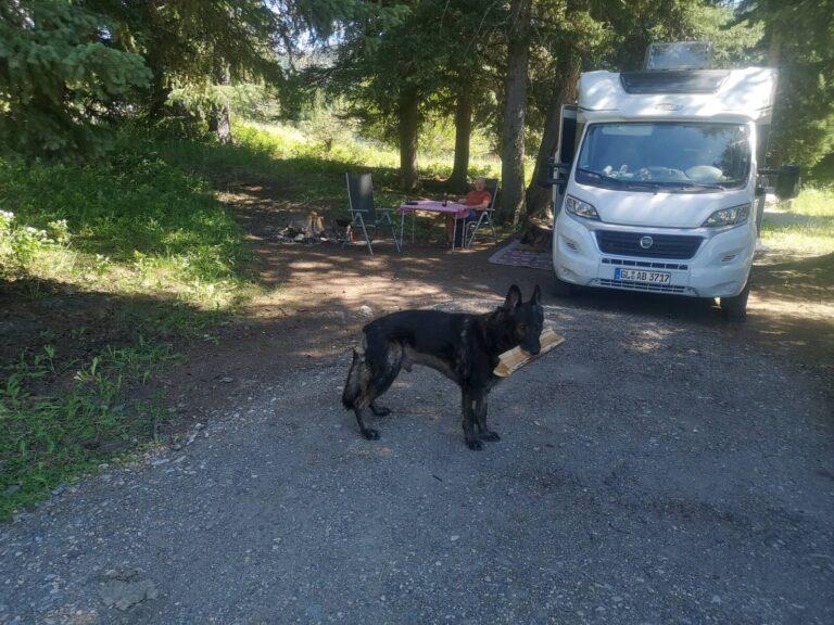 Gallatin Campground mit Finn