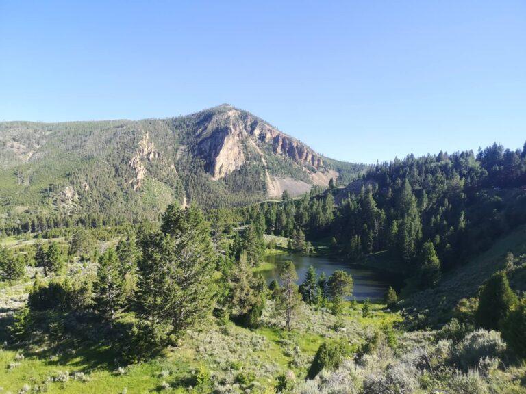Yellowstone grüne Landschaft
