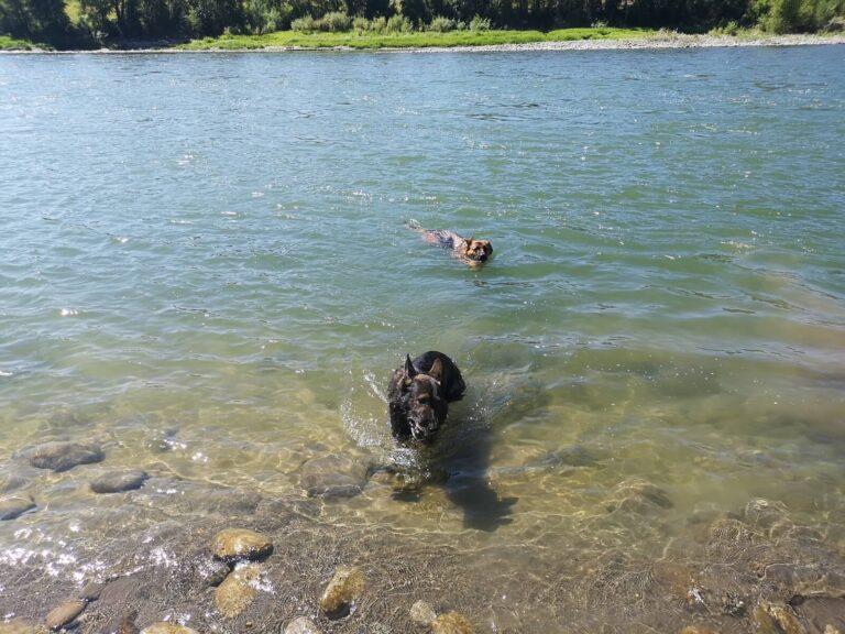 Schwimmen im Yellowstone River Itch-Kep-Pe