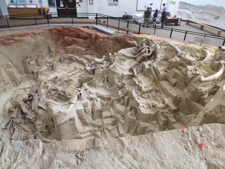 Überblick Ausgrabung Mammoth Site