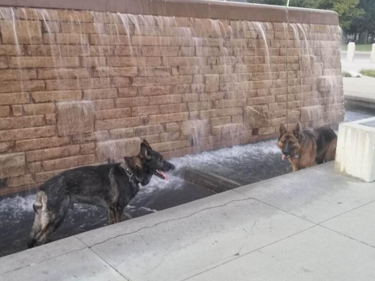 Wichita Hundebaden