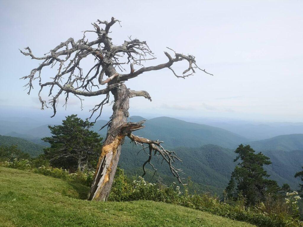 Blue Ridge Overlook Baum